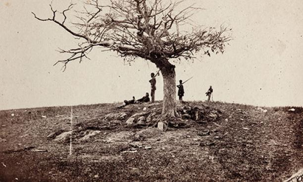 A Lone Grave on the Battlefield of Antietam: A tree marks a soldier's burial place.