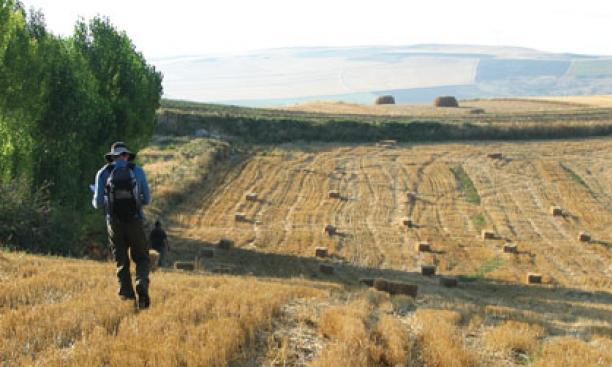 Graduate student Mark de Groh looks for artifacts near Beyözü, a village in central Turkey.