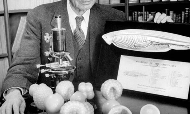 Edwin Grant Conklin, circa 1946