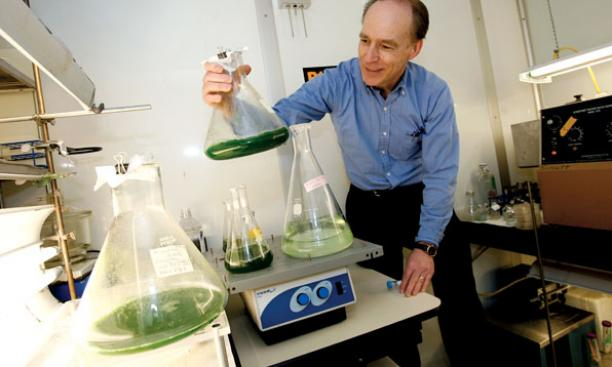 Professor Charles Dismukes examines bacteria and algae that could produce green fuels or fuel precursors.