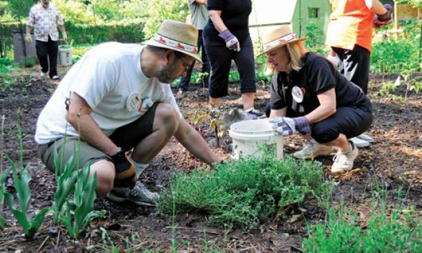 David Keller '79 and Joyce Thornhill '79 work in the Forbes garden as part of the class community-service project