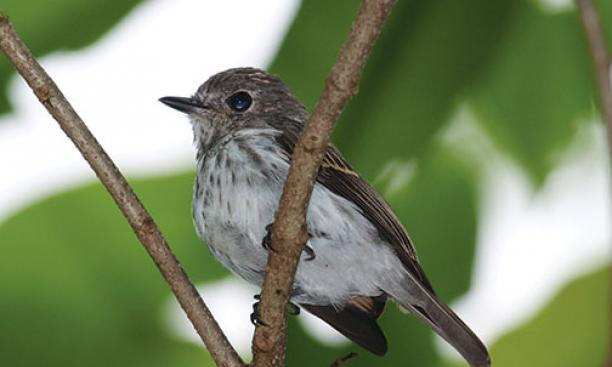 Researchers have discovered a new bird species on the Indonesian island of Sulawesi.