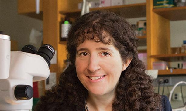 Laura Landweber '89's work on the complex sex life of Oxytricha could lead to a better understanding of how our own genome replicates.