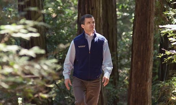 "Redwoods are ""exemplars of resilience, patience, and forgiveness,"" says Sam Hodder '91, head of the San Francisco-based Save the Redwoods League."