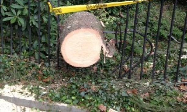 By the storm's end, at least 50 trees had come down on the University grounds, including one that destroyed a southern portion of the fence surrounding Prospect Garden.